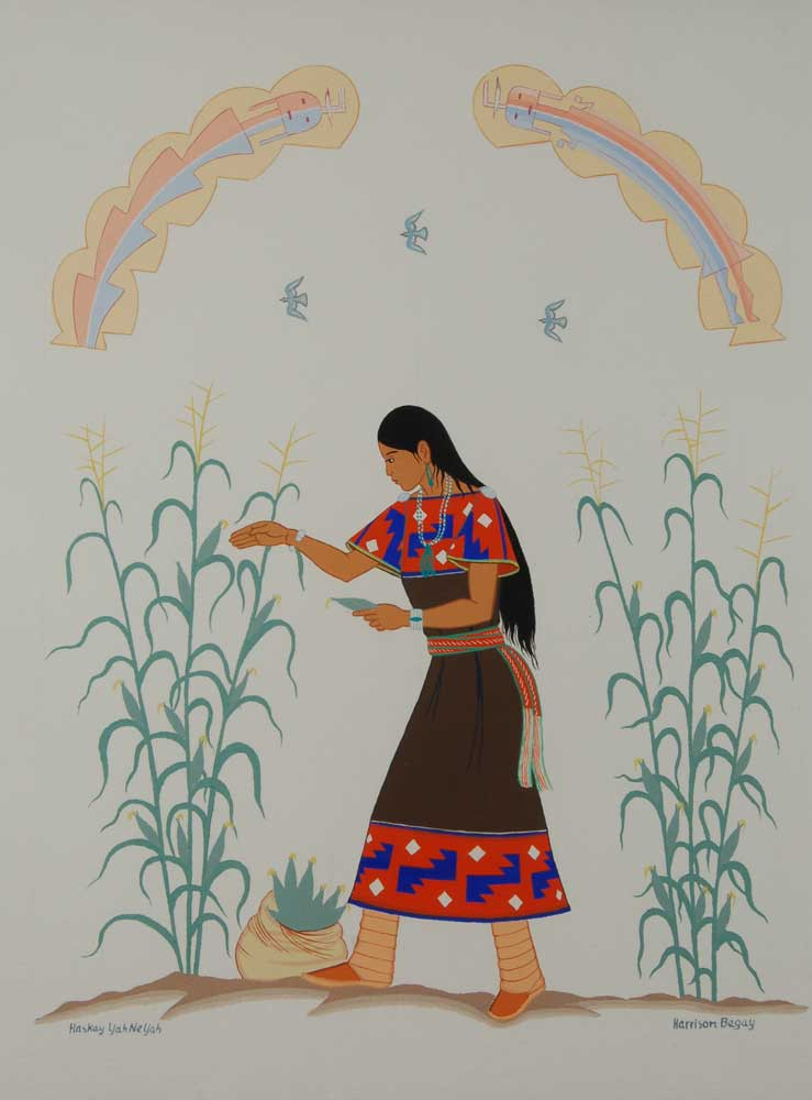 Young Din 233 Navajo Girl Gathering Corn By Harrison Begay
