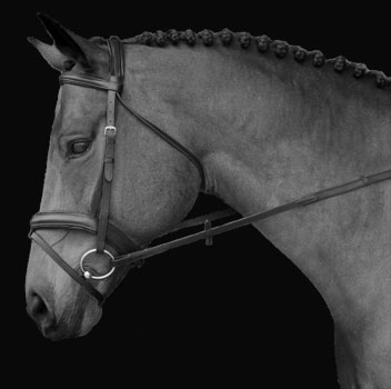 Example showing a horse bridle.