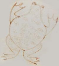Artist Signature - Joy Navasie (1919 - 2012) second Frog Woman - Yellow Flower